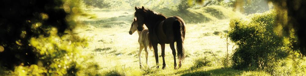 Diagnostic Animals - Furanalysis or Hairanalysis - Equine Horse